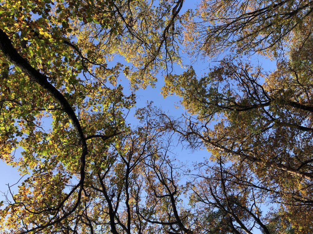 Podzimní stromy při pohledu zdola za slunečného počasí